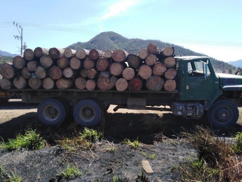 Fortalecen brigadas de sanidad para revertir daño por tala ilegal