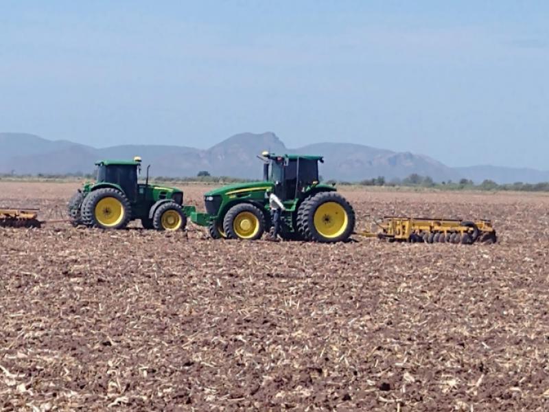 Forzoso crear abanico de cultivos de baja demanda y rentables