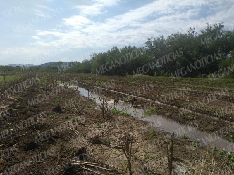 Frente frío no. 12 afecta cosecha en Mixtequilla
