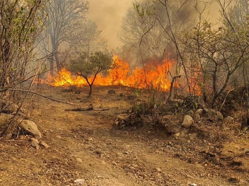 Fuego en la primavera quedará liquidado hasta mañana