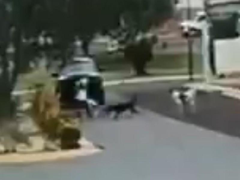 Fueron resguardados por el Ayuntamiento los perros callejeros