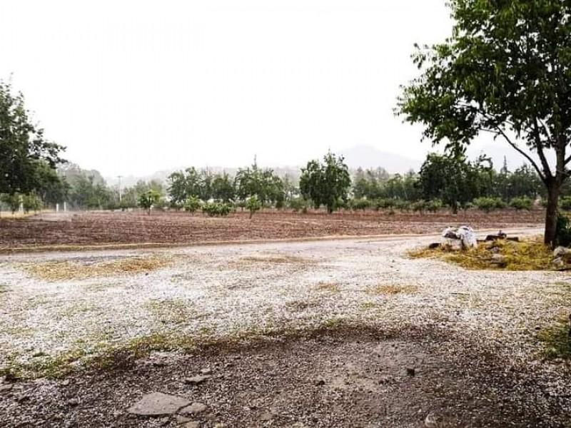 Fuerte granizada deja estragos en cultivos de la sierra norte