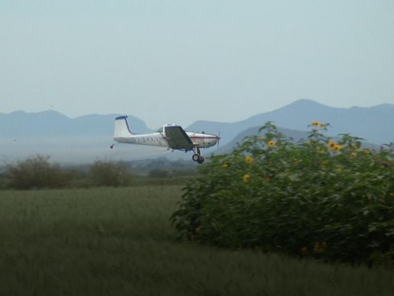 Fumigaciones  con aeronaves,grave problema en región norte dicen investigadores