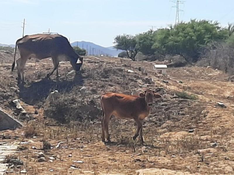 Ganadereros piden ayuda a autoridades por sequía