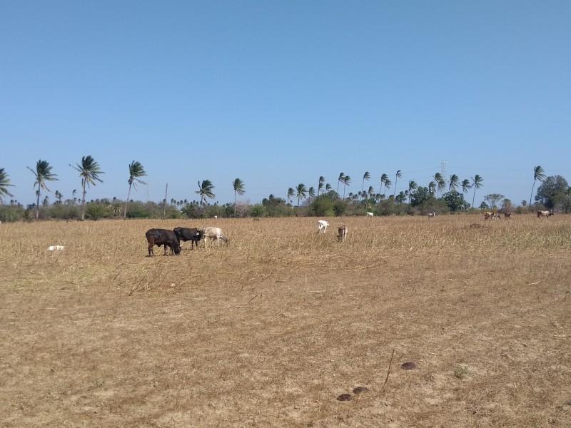 Ganaderos locales afectados por ganados de otros estados