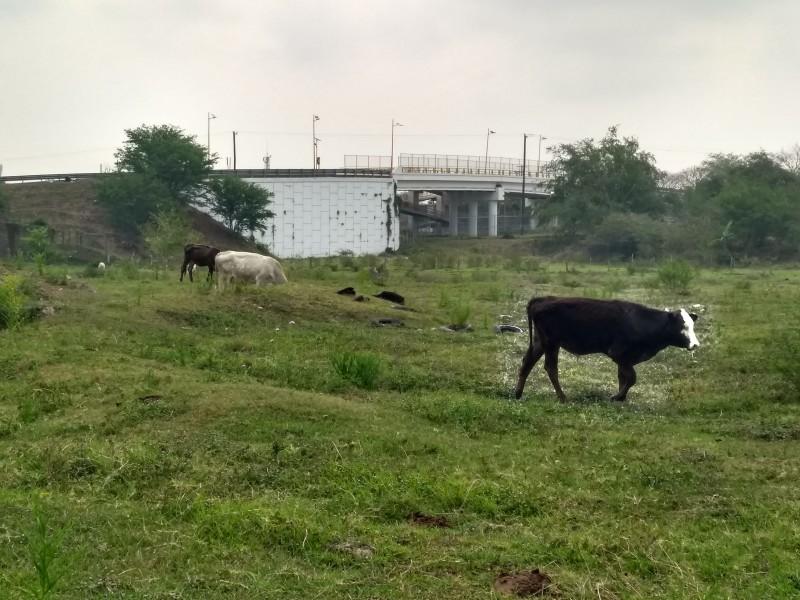Ganaderos, sin apoyos por sequía