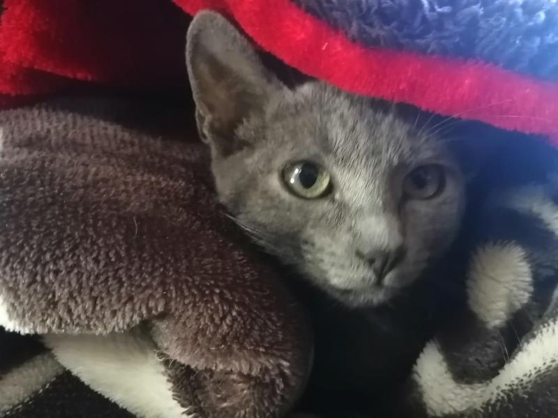 Gatos de caso Diana Laura, a la espera de hogar
