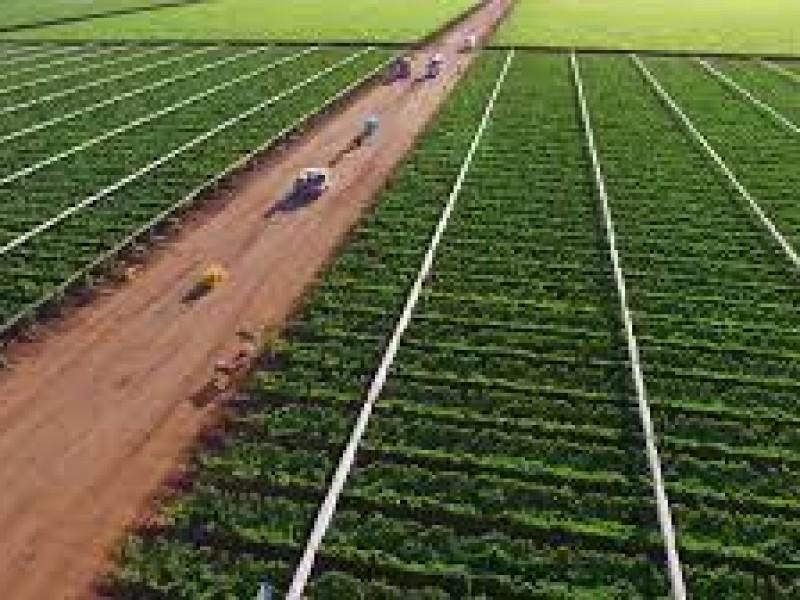 Genera 15 mil empleos cosecha de hortalizas en el Valle