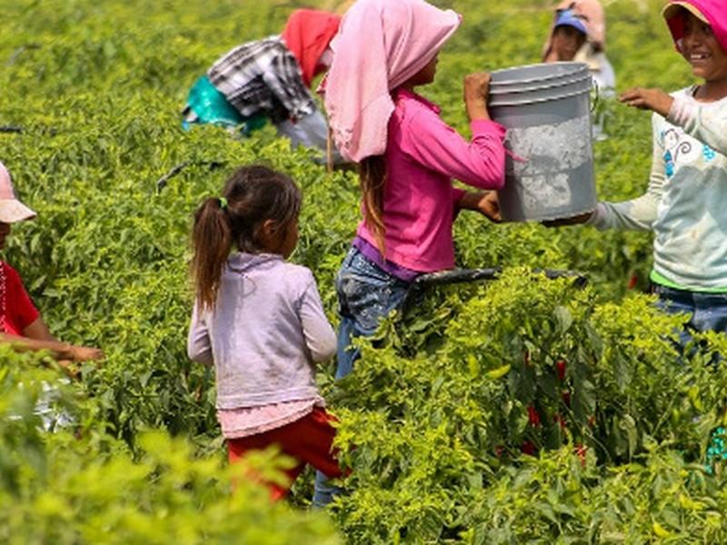 Genera pandemia incremento de trabajo infantil en Oaxaca; vulnera DH