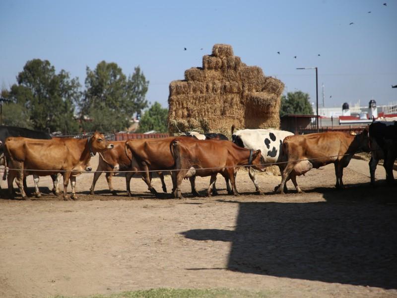 Genera Querétaro y Aguascalientes sinergia en materia agropecuaria