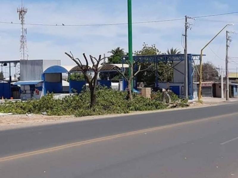 Gente inconsciente, talan árboles para presumir su casa