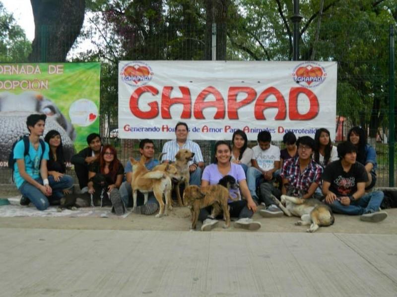 GHAPAD se queda sin alimento para los peludos rescatados