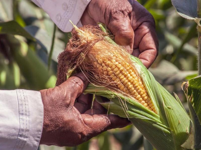 Glifosato, sigue siendo el herbicida más usado en Chiapas.