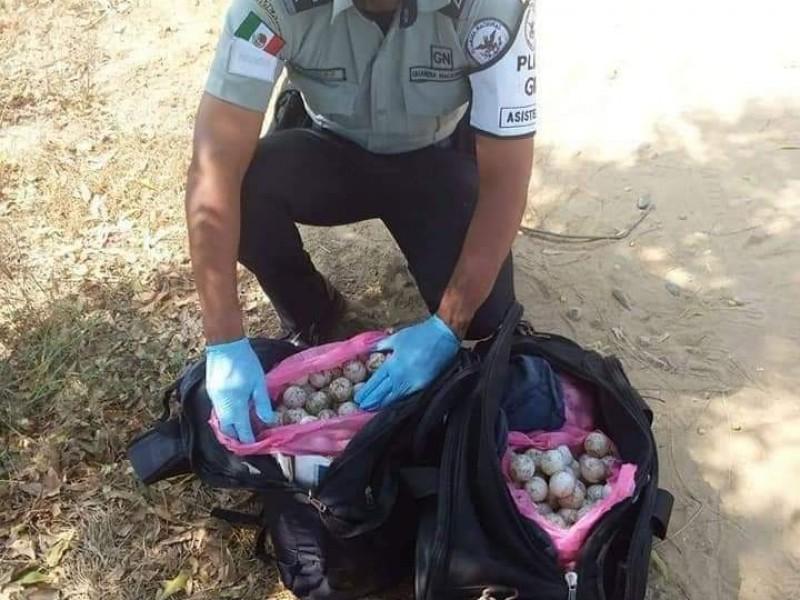 GN asegura huevos de tortuga en carretera federal 200