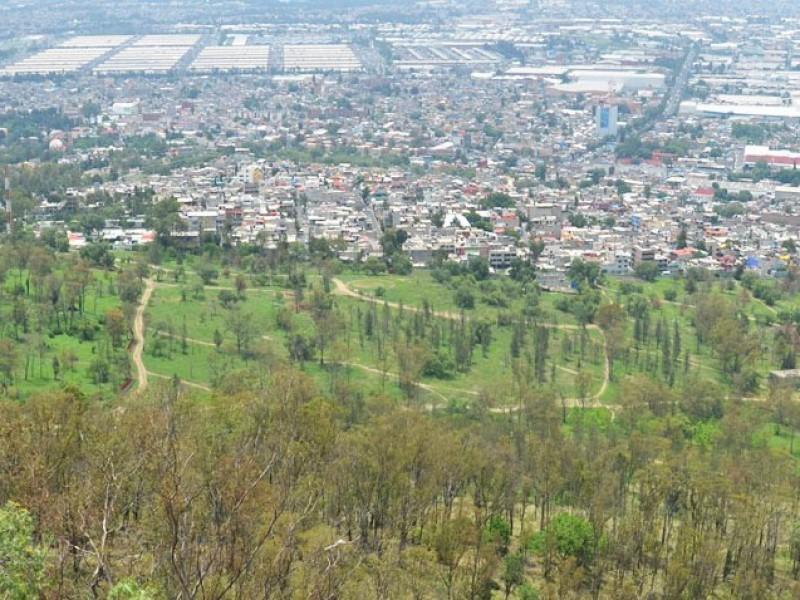 Gobierno de CDMX plantará 10 millones de árboles
