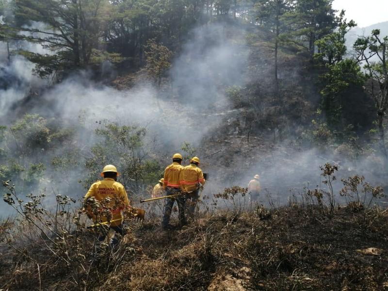Gobierno del Estado solicita declaratoria de emergencia por incendios forestales