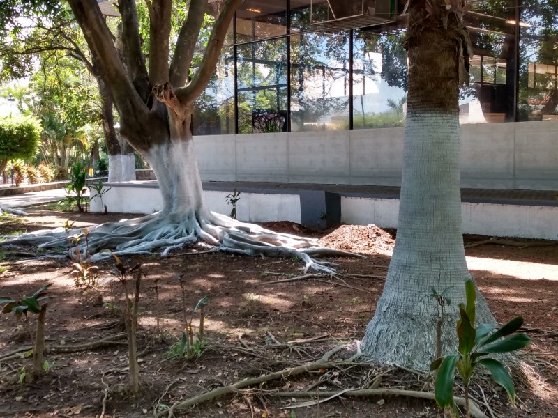 Gobierno responsable de pintar árboles en la Alameda