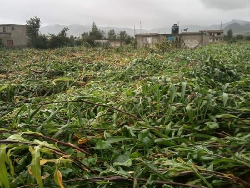 Grace arrasa con terrenos de cultivo en Zautla