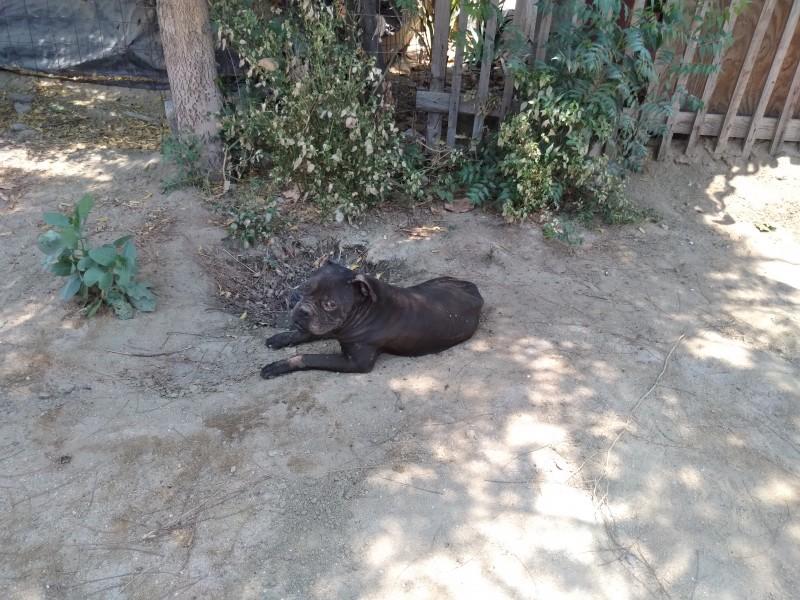 Grave problema animales en situación  de calle
