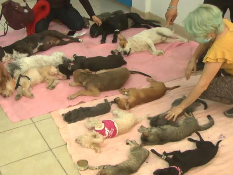 Hace UPAN campaña de esterilización de mascotas