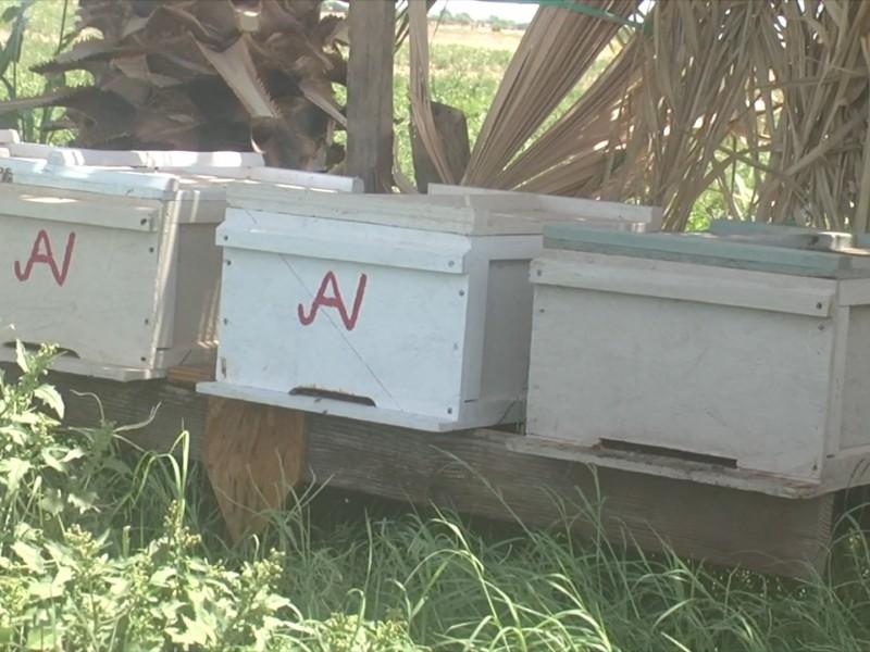 Hacen llamado a la ciudadanía a cuidar a las abejas
