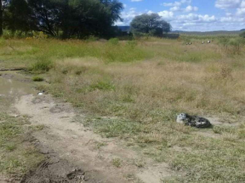 Hallan 19 cadáveres en Lagos de Moreno