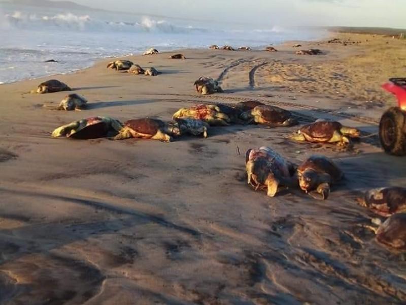Hallan 300 tortugas muertas en costa oaxaqueña, especialistas analizan causas