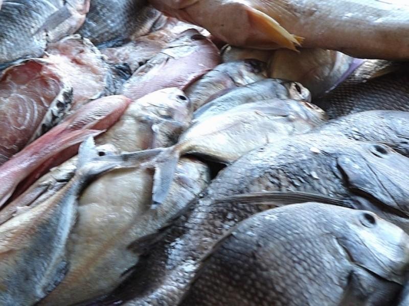 Marisqueros registran buenas ventas en esta cuaresma