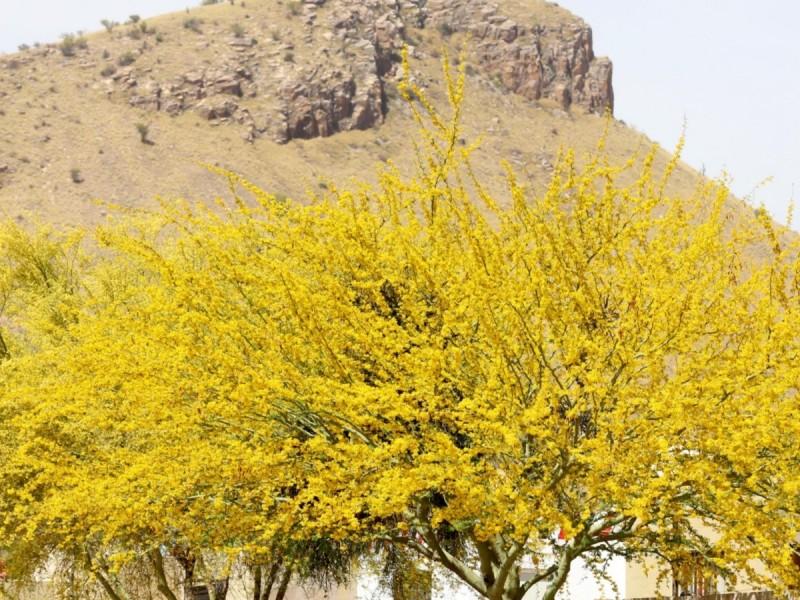 Hermosillo todavía esta lejos de ser una ciudad verde