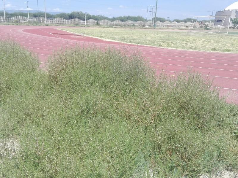 Hierba invade pista de tartán en unidad deportiva