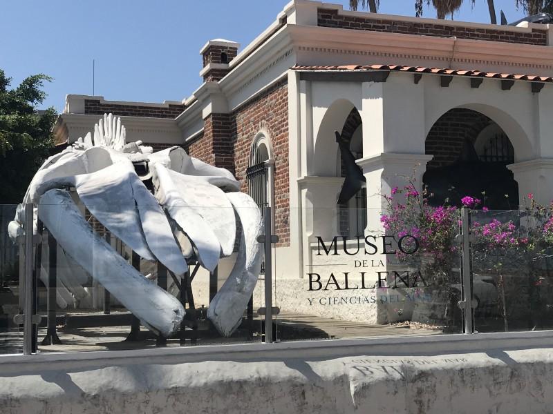 Inspectores hostigaron al museo de la ballena