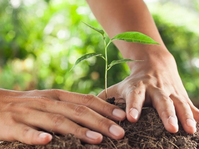 Hoy celebran día mundial del suelo y la tierra fértil