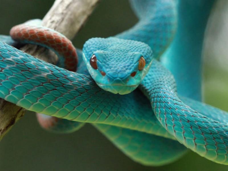 Hoy es el Día Mundial de la Serpiente
