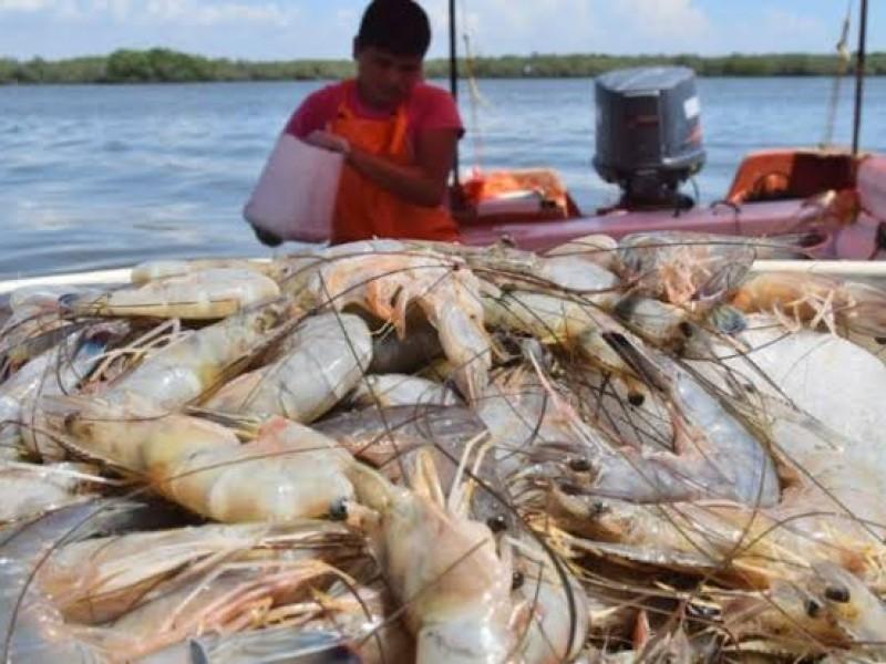 Hoy inicia veda de camarón en Nayarit y otros estados