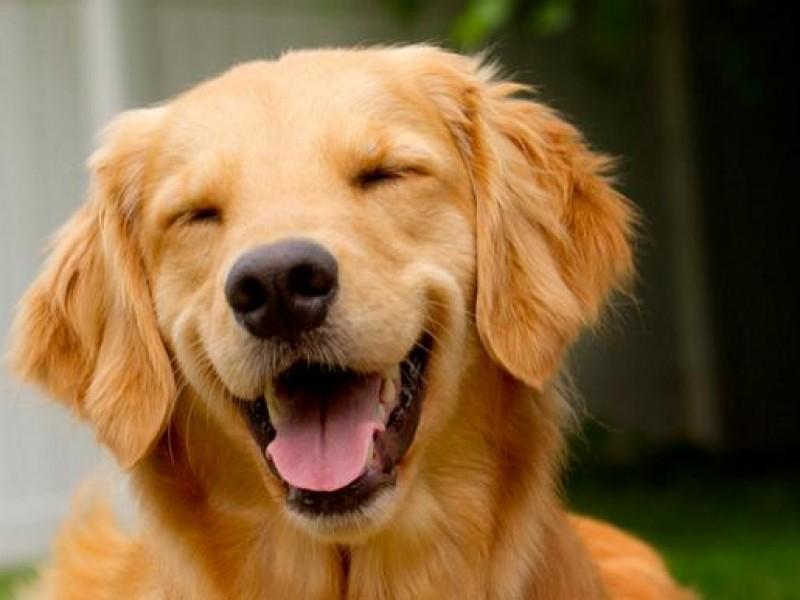 Hoy se celebra El Día del Perro