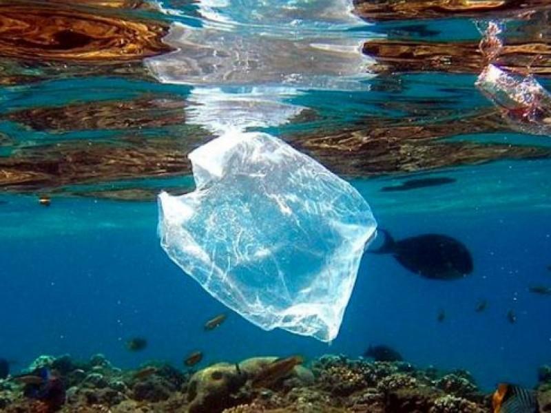 Humanos consumen plásticos por peces tóxicos