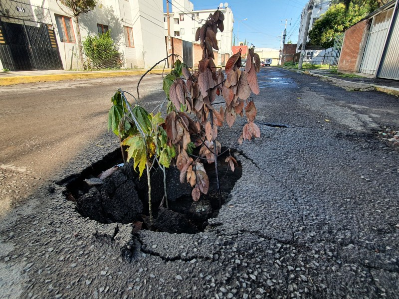 Hundimiento en la Vicente Guerrero afecta a tránsito vehicular