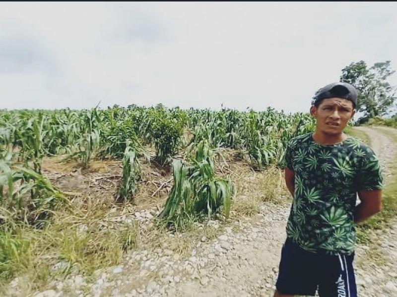 Huracán Grace golpea a sector agrícola en Tuxpan