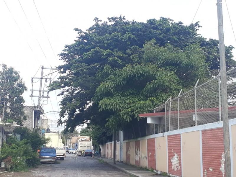 Ignorados por las autoridades; ciudadanos reportan riesgo por árboles enormes