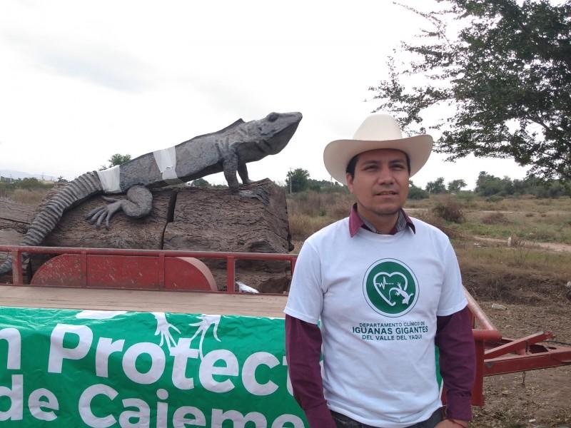 Iguanas gigantes de Cócorit, sufren de extraña enfermedad