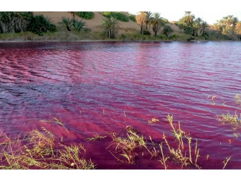 Estanque se tiñe de rojo cerca del mar Muerto MEGANOTICIAS