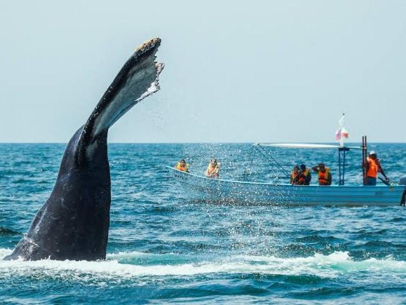 Imponen fecha oficial para avistamiento de ballenas en Nayarit