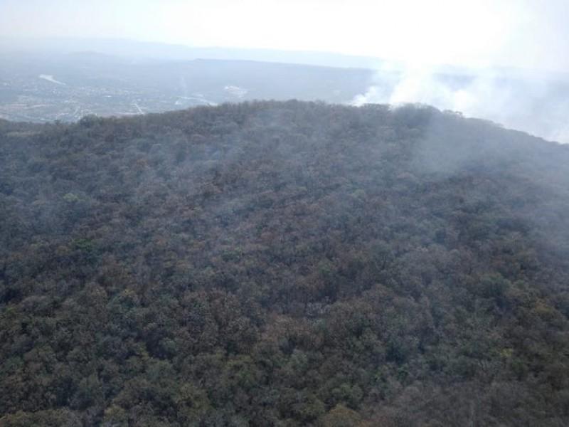Impulsarán estudiantes campaña de reforestación