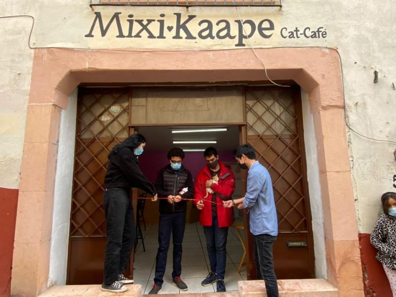 Inauguran primer cat café en Zacatecas, el 11vo en México