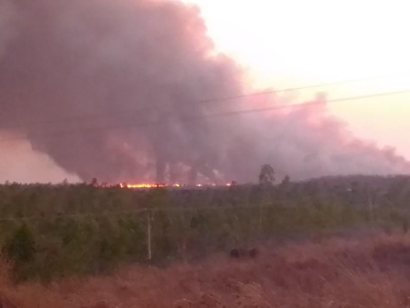 Incendio consume 300 hectáreas de tules en Petatlán