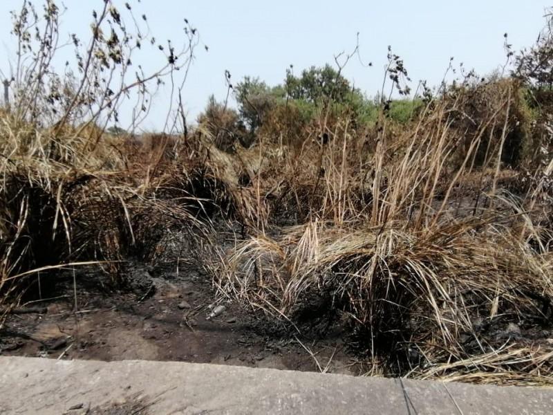 Incendio de humedal pudo ser provocado: PMA