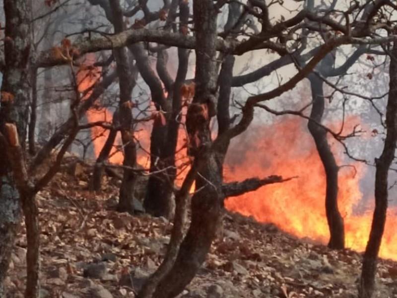 Incendio devora 500 hectáreas en Moyahua