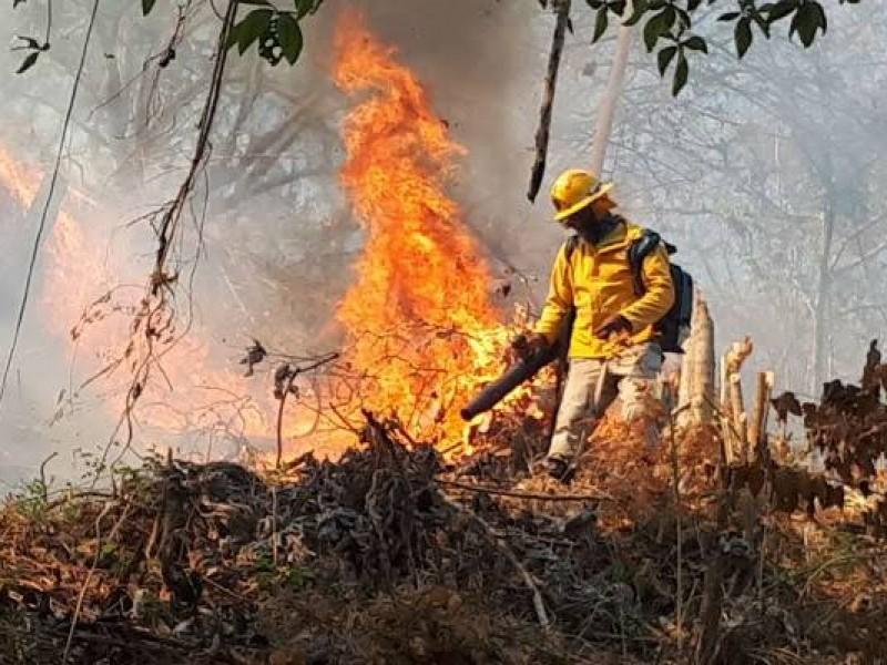 Incendio en Panamá consume 140 hectáreas de bosque