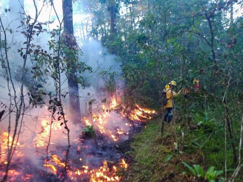 Incendio forestal consume por cuarto día zonas de los Chimalapas