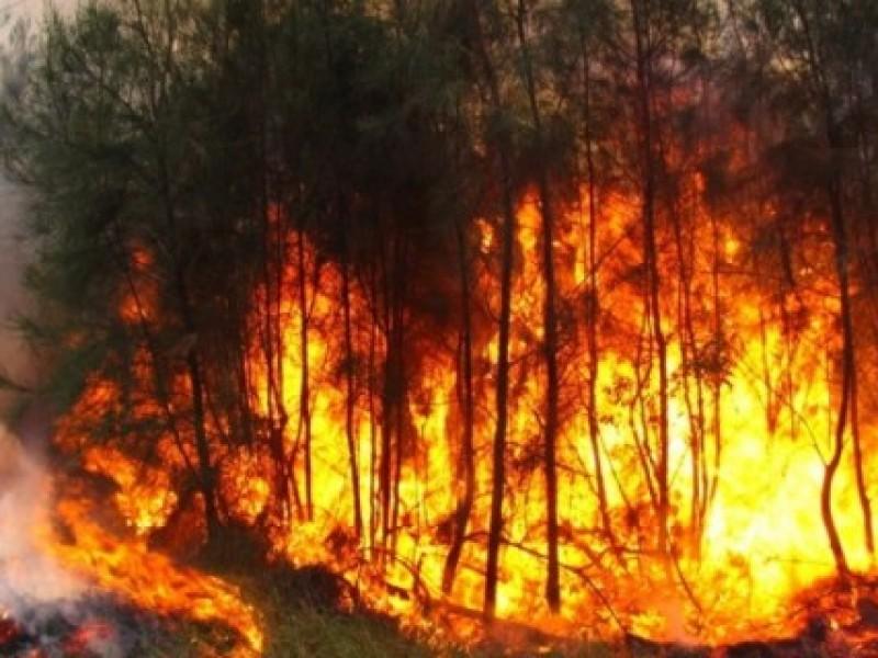Incendio forestal consume reserva de los Chimalapas